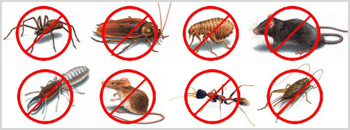 Factors to Think about In Selecting Pest Control Pros
